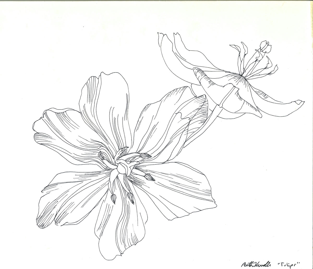 ink drawing: yellow tulips