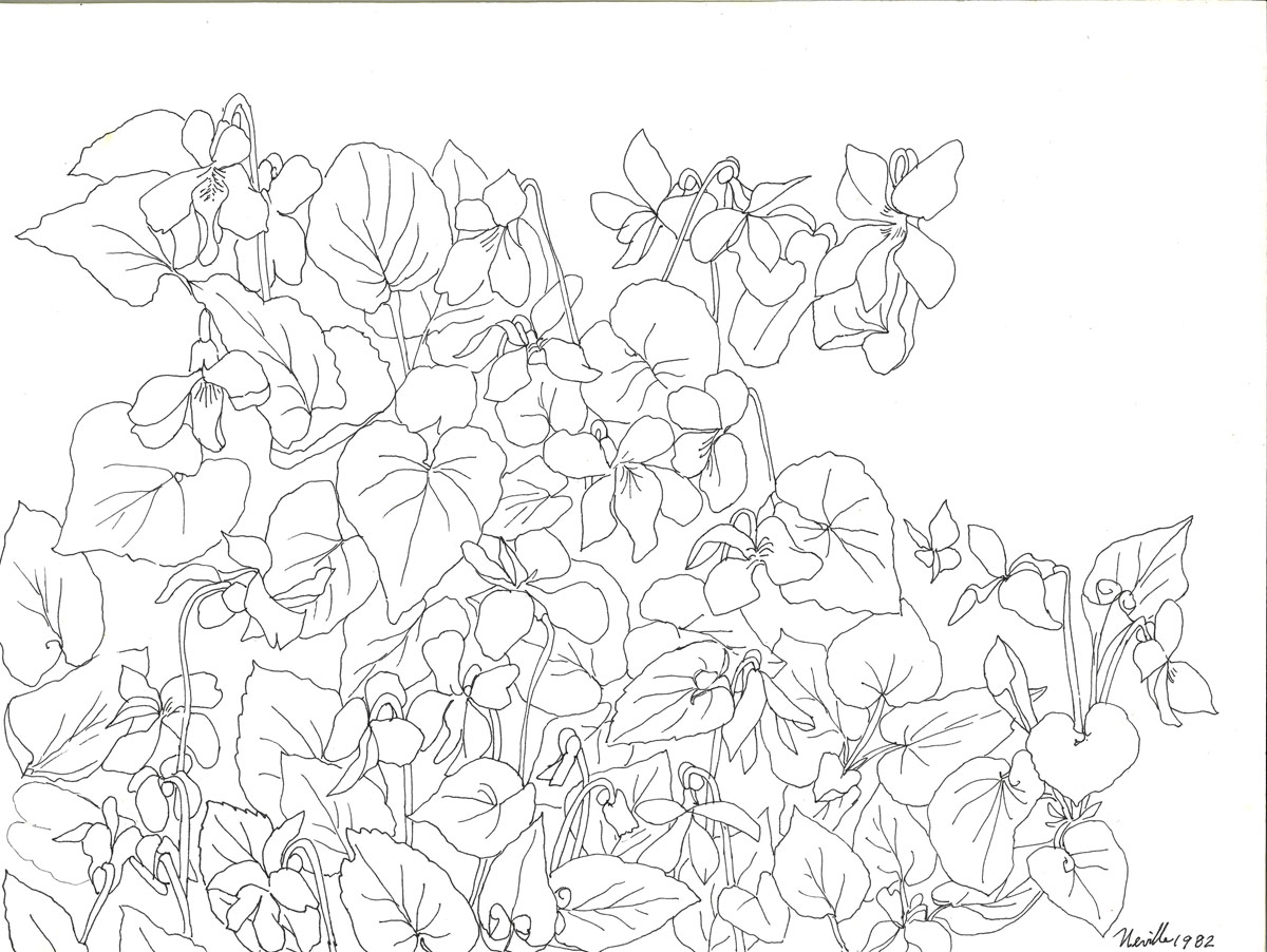 pen drawing: Wild Violets #1