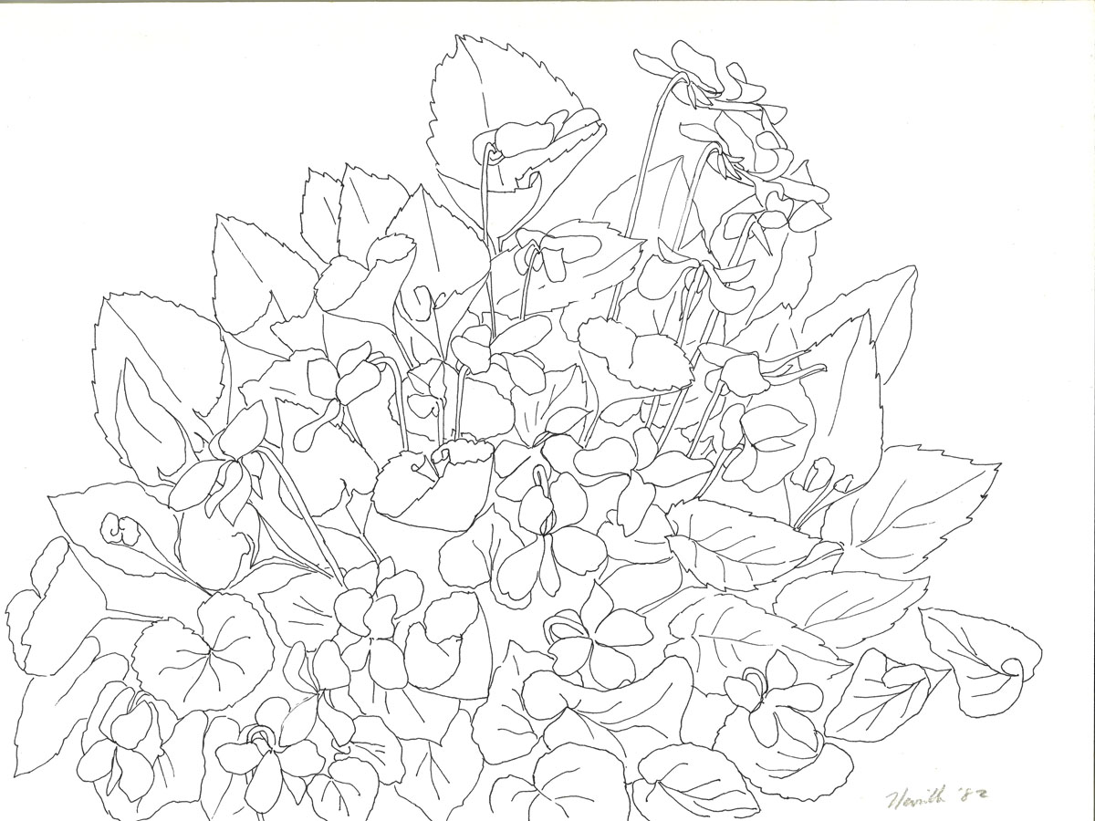 pen drawing: Wild Violets #2