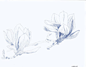 pen drawing: Magnolia #2