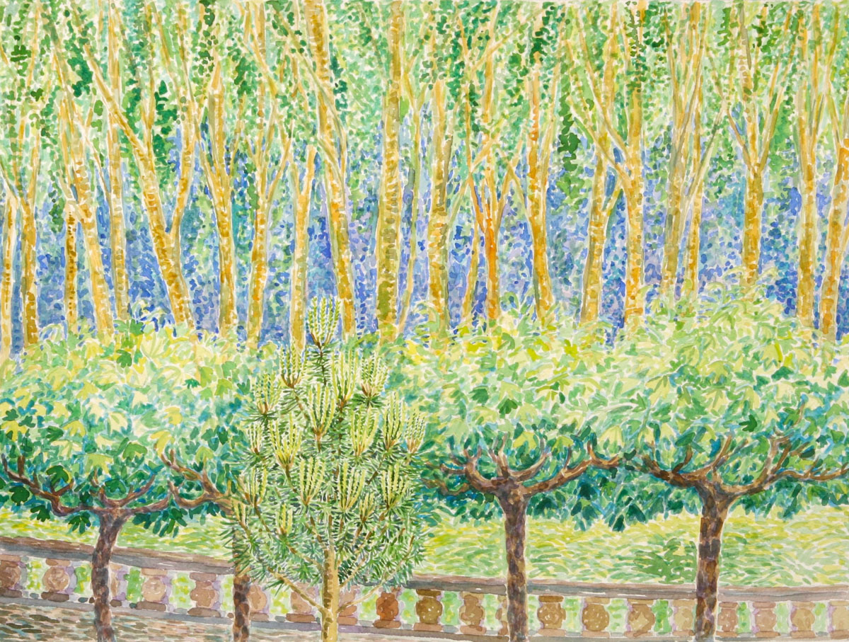 watercolor: Pollard Poplar Trees, France