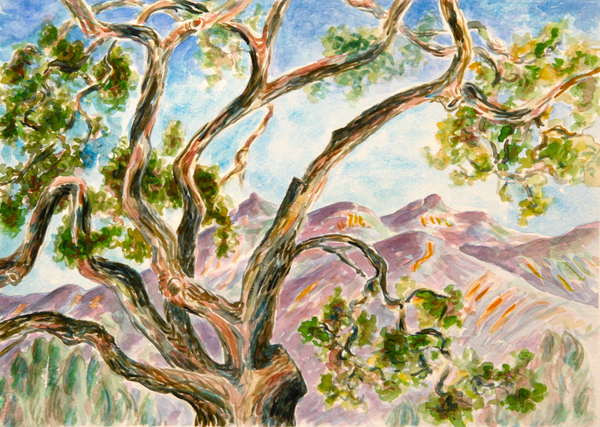 watercolor: Ancient Oak, Ojai, CA
