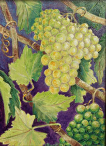 Chardonnay: oil painting