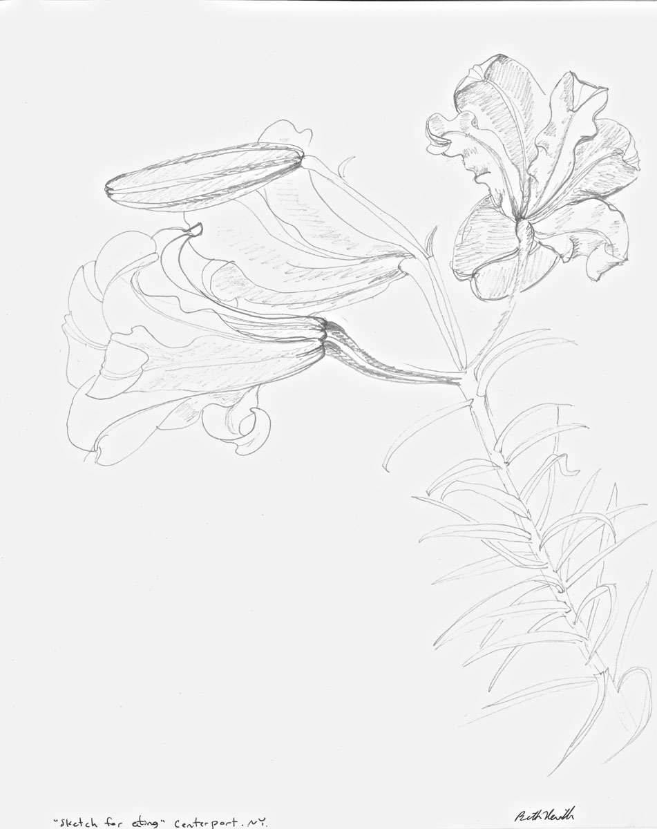 graphite drawing: Day Lilies #1