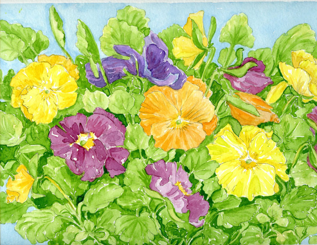 Pansies, study: watercolor painting