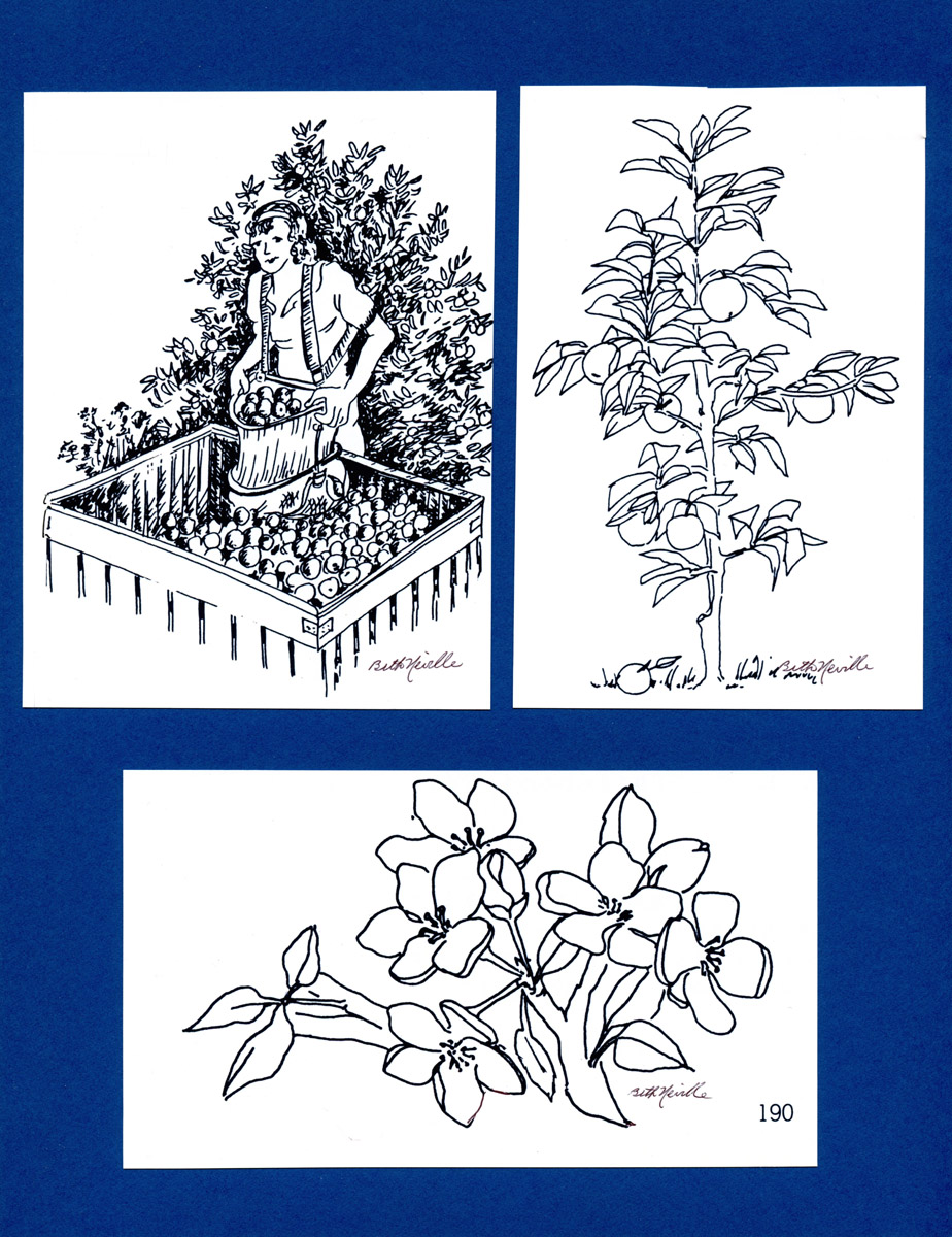 Apple Blossoms, Picking Apples, illustration, Smith College Yearbook