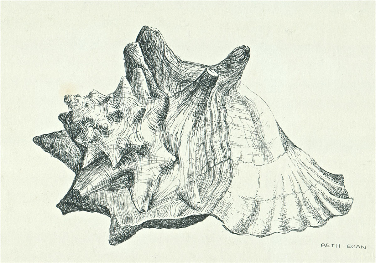 pen drawing: Conch Shell